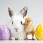 Wielkanoc w przedszkolu - scenariusz uroczystości