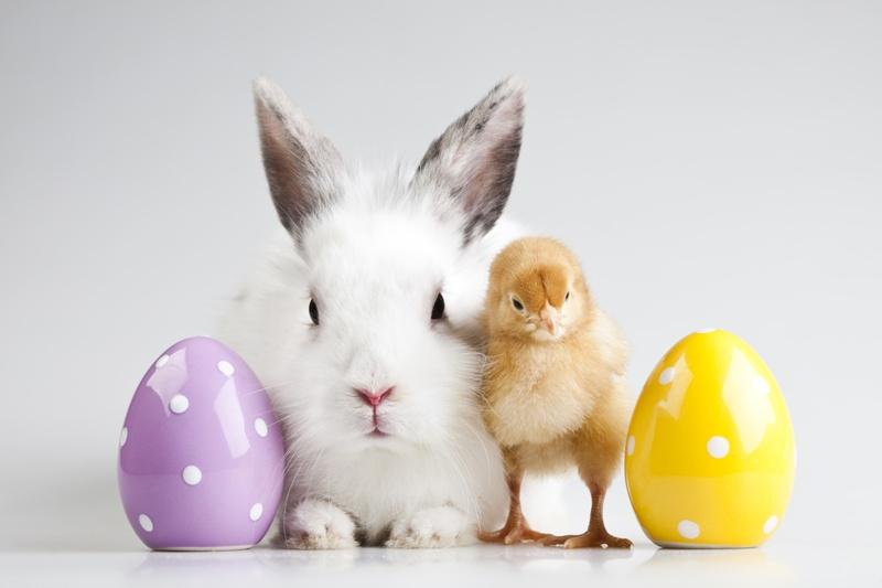 Citaten Pasen Fb : Wielkanoc w przedszkolu scenariusz uroczystości pani monia